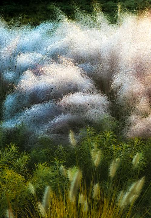 Grasses on a September Morning