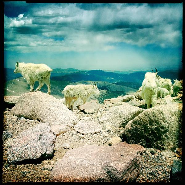 Mountain Goats, Mount Evans