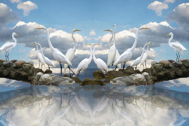 Mirrored Sky Meditation: Egret Gathering by Louise Parms