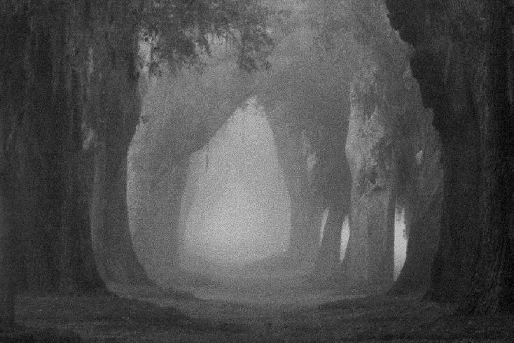 Avenue of Oaks by Jim Squires