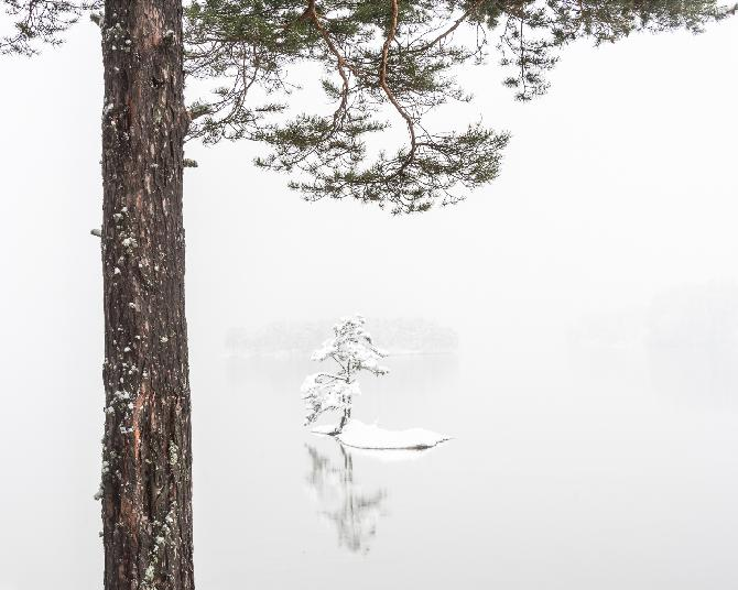 Two Pines by Dag Røttereng