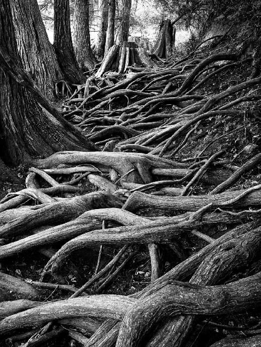 Web of Roots by Billy
