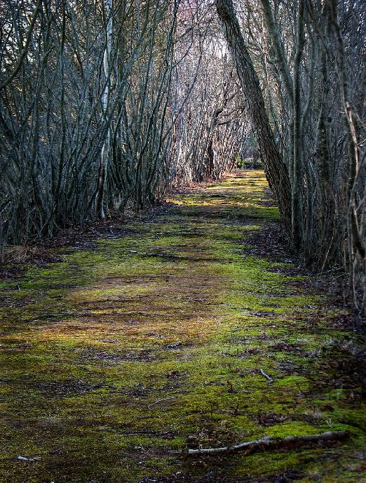 Mossy Path by Mark Hopkins