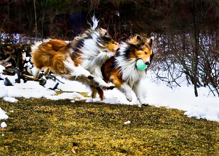 Attack in Flight! 1st Place People's Choice by Djorn Crown, St. George, VT