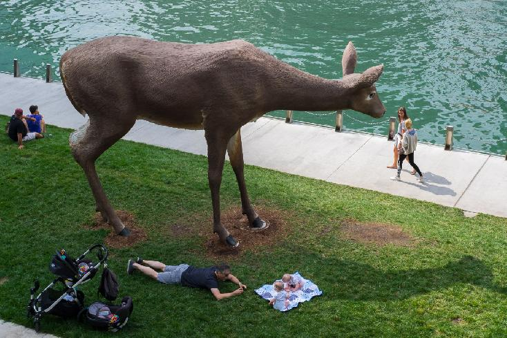American Deer Chicago 2017 by Richard Flansburg
