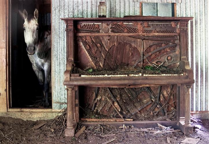 Dust Bowl Blues by Debra Van Swearingen