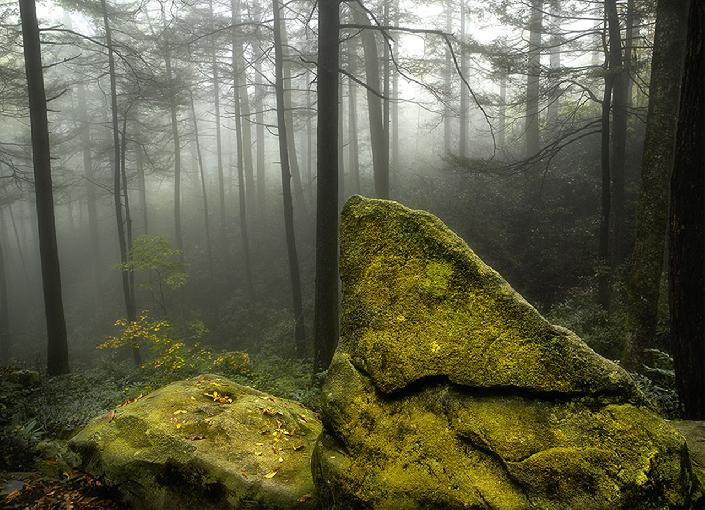 Boulder in the Woods by Tom duffy
