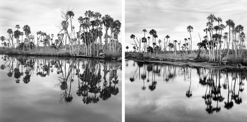 Creekside 2011, 2016 by Benjamin Dimmitt