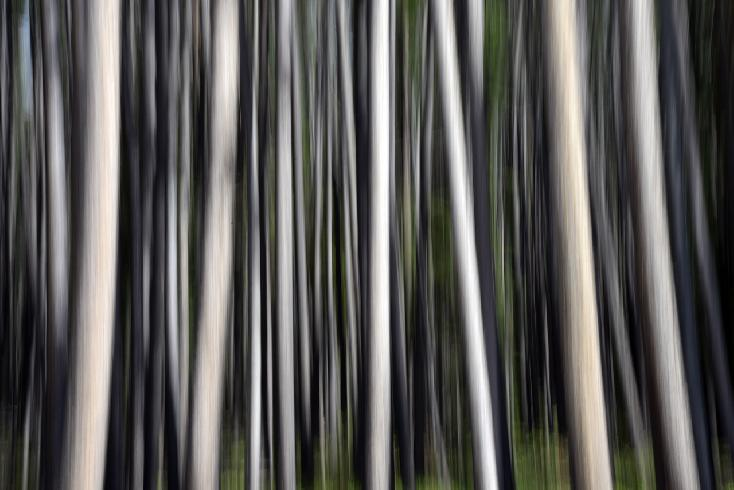 Sierra Madre Aspens   Abstract by Bo Cheatham