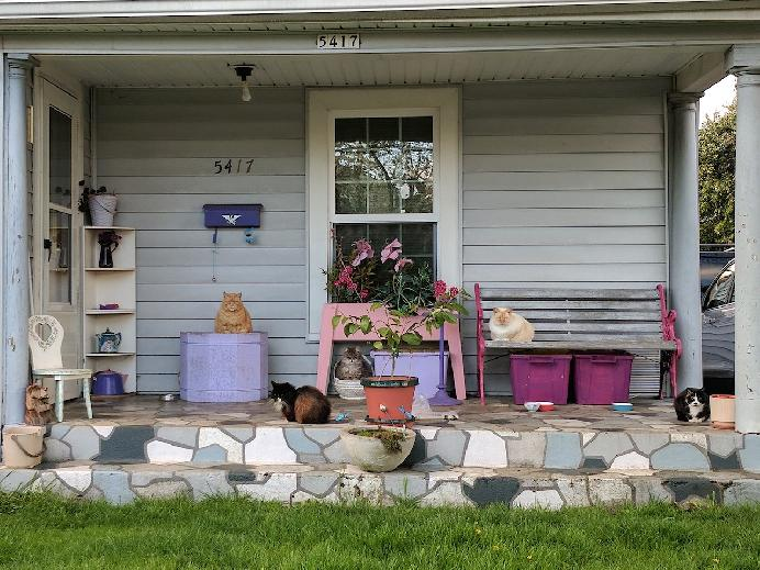 Untitled (cats on porch), Portland, Oregon by Kerry Rowand